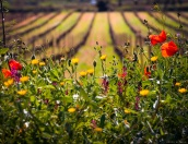 Spring.2014_Jordi Elias-2