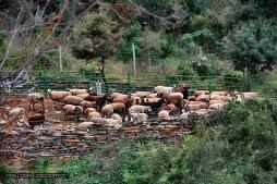 Ramats al bosc Sant Ramón