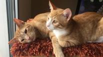 gats-per-adoptar